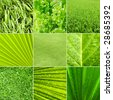 Collage nature green background. All image belongs to me. - stock photo