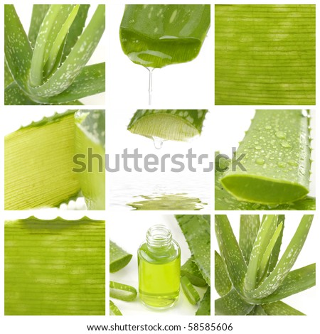 Collage of aloe leaf and juice droplet - stock photo