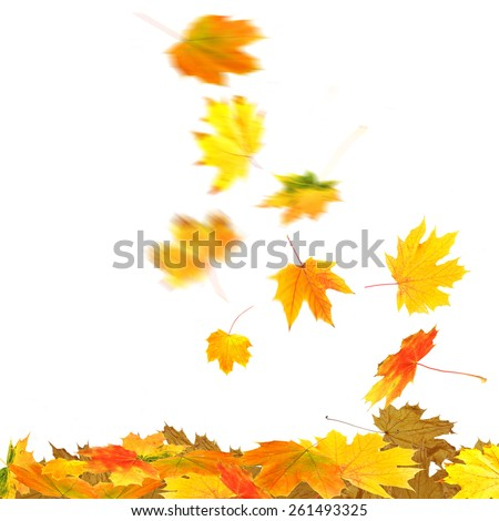 Collage of autumn leaves, isolated on white - stock photo
