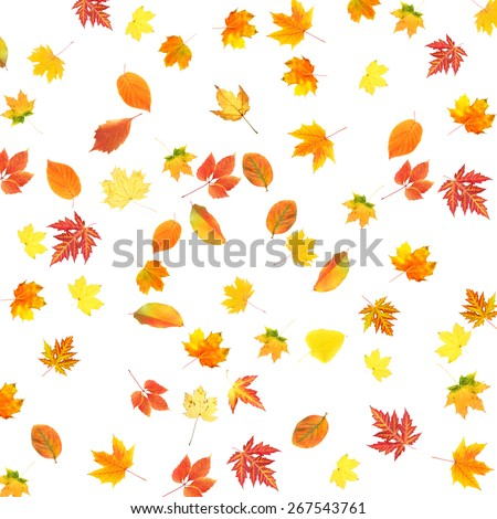 Collage of autumn leaves isolated on white - stock photo