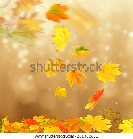 Collage of autumn leaves on bright  background - stock photo