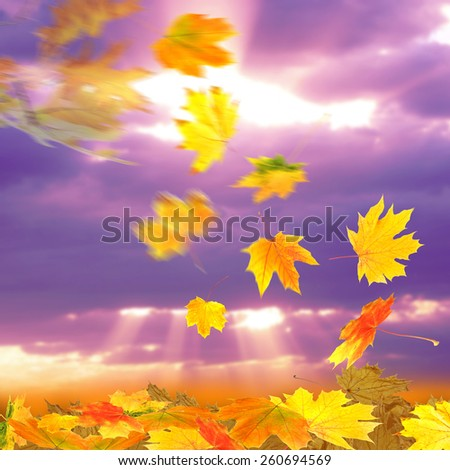 Collage of autumn leaves on sky background - stock photo