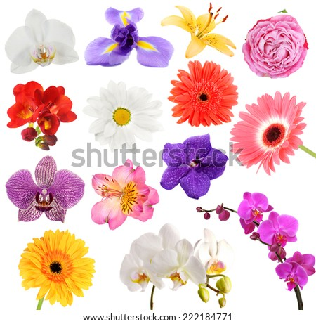 Collage of beautiful flowers - stock photo