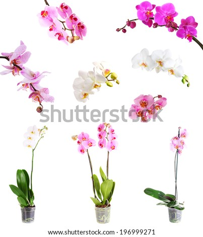 Collage of beautiful orchids isolated on white - stock photo