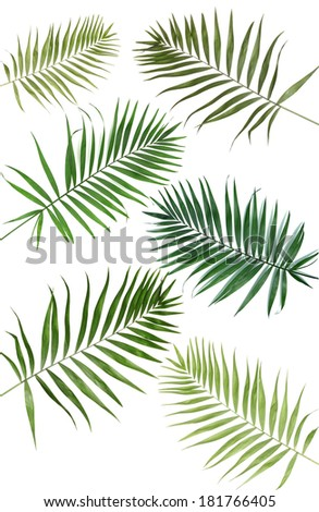 Collage of beautiful palm leaves isolated on white - stock photo