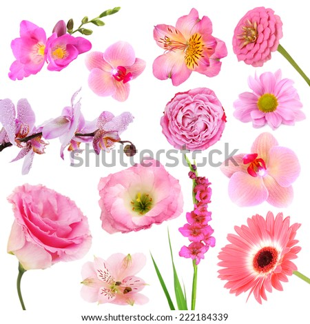 Collage of beautiful pink flowers - stock photo