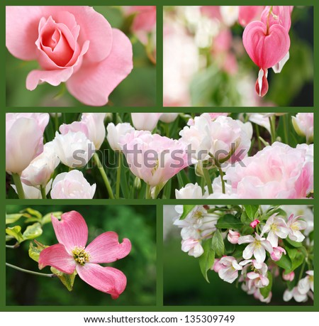 Collage of beautiful pink flowers (includes a rose, bleeding heart, double tulips, dogwood blossom, and apple blossom) taken outdoors in natural setting. - stock photo