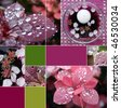 collage of beautiful spring flowers for aroma therapy - stock photo