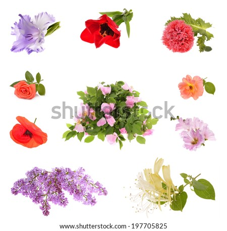 Collage of beautiful spring flowers , isolated on white  - stock photo