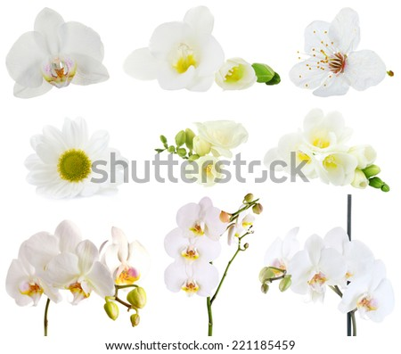 Collage of beautiful white flowers - stock photo