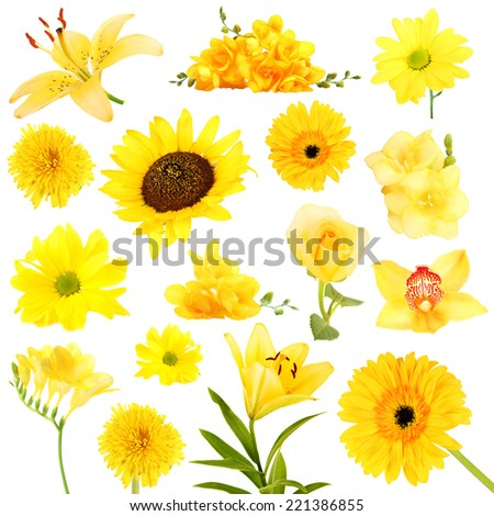 Collage of beautiful yellow flowers - stock photo
