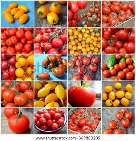 Collage of big and small red and yellow tomatoes of different kinds