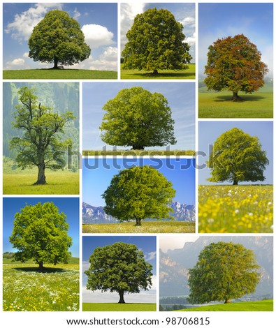 collage of big trees - stock photo