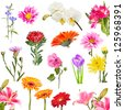 Collage of blooming flowers isolated on white background - stock photo