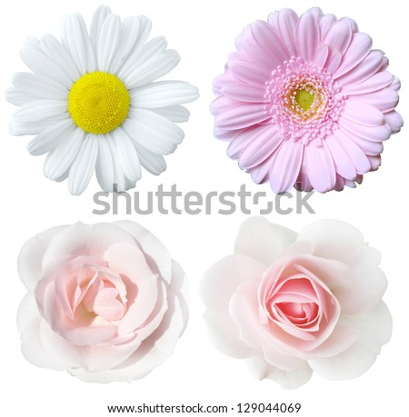 collage of bright flowers isolated - stock photo