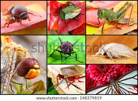 Collage of Brightly Colored Red Yellow and Green insects - stock photo