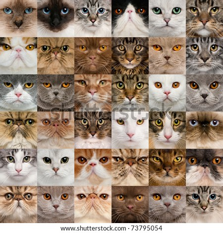 Collage of 36 cat heads - stock photo