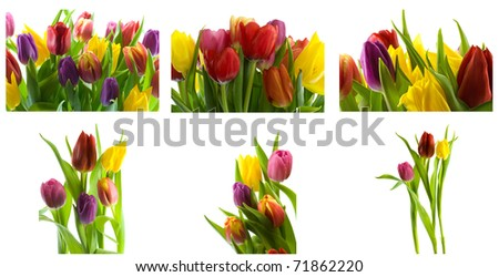 Collage of colorful  tulips on white