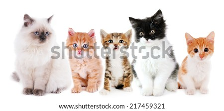 Collage of cute cats isolated on white - stock photo