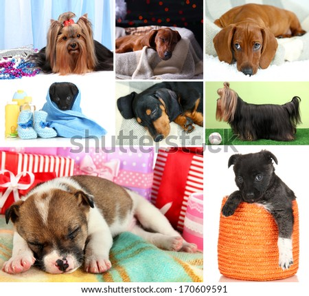 Collage of cute puppies - stock photo
