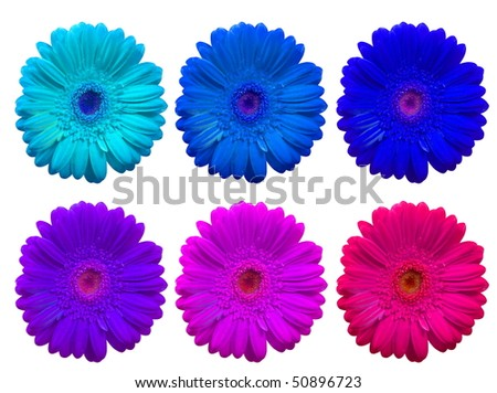 Collage of  Daisy Gerbera Flowers over white background - stock photo