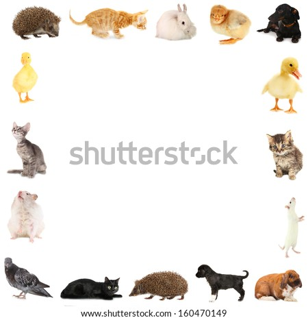 Collage of different cute animals in form of framework - stock photo