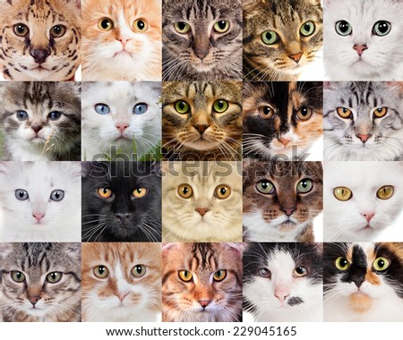 Collage of different cute cats - stock photo