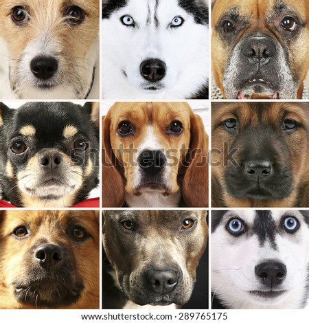Collage of different dogs - stock photo