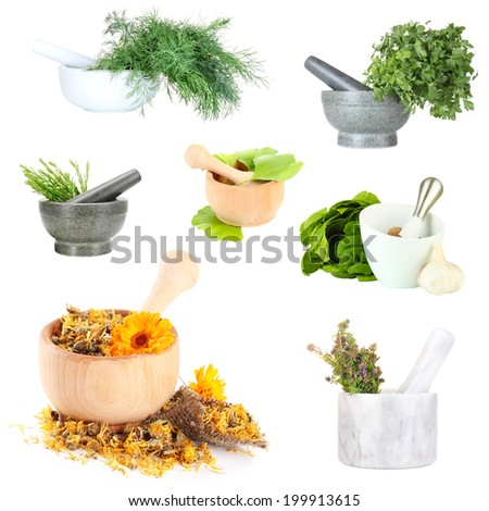 Collage of different herbs isolated on white - stock photo