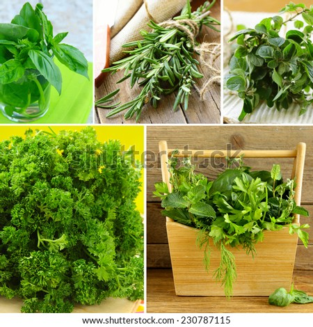 collage of different kinds of herbs (basil, oregano, parsley, rosemary) - stock photo
