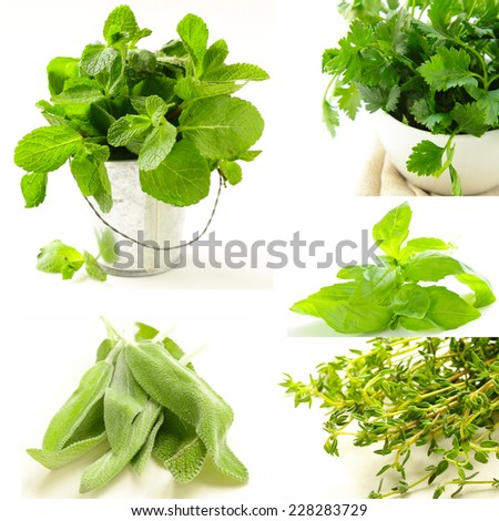 collage of different kinds of herbs (thyme, mint, basil, sage) - stock photo