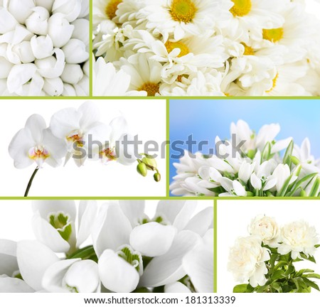 Collage of different white flowers - stock photo