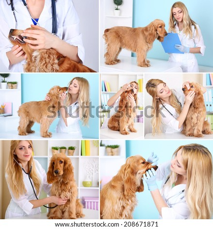 Collage of dog at vet - stock photo