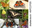 Collage of European butterfly species. Series III - High brown fritilary, peacock, Clouded yellow, swallowtail, brown argus, comma, red admiral. - stock photo