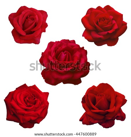 collage of five dark red roses isolated on a white background - stock photo