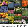 Collage of flora - stock photo