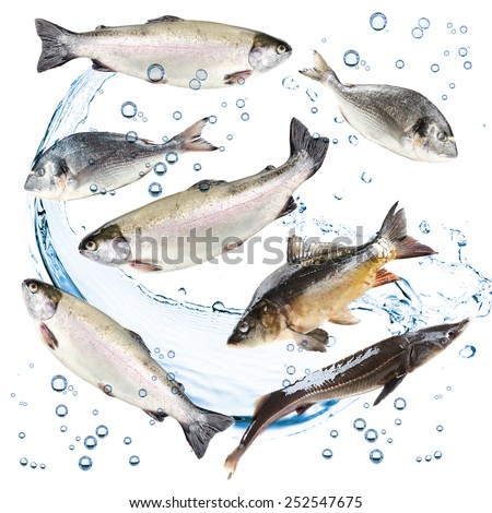 Collage of fresh fishes - stock photo