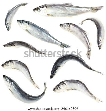 Collage of fresh fishes, isolated on white - stock photo