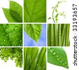 collage of fresh green leaves - stock photo