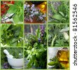 Collage of fresh herb images.  Includes basil, parsley, oregano, thyme, sage,and rosemary. - stock photo