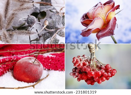 Collage of frozen plants on snow, close up - stock photo