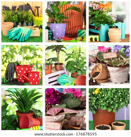 Collage of gardening, closeup - stock photo