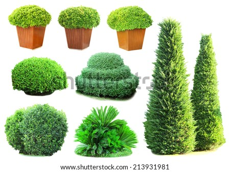Collage of green bushes isolated on white - stock photo