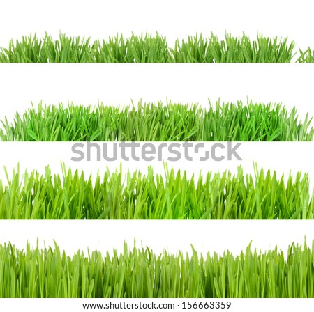 Collage of green grass isolated on white