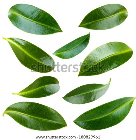 Collage of green leaves isolated on white - stock photo