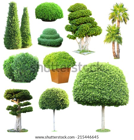Collage of green trees and bushes isolated on white - stock photo