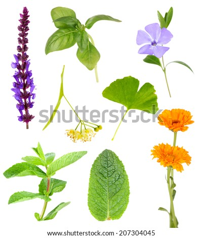 Collage of healing herbs, isolated on white - stock photo