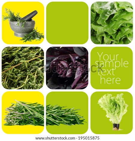 Collage of healthy herbs - stock photo
