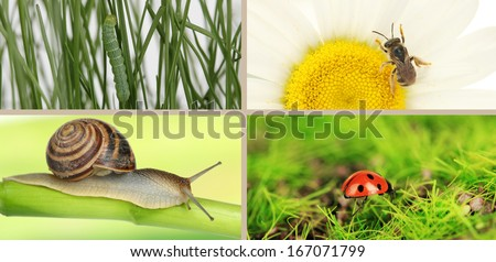 Collage of insects - stock photo