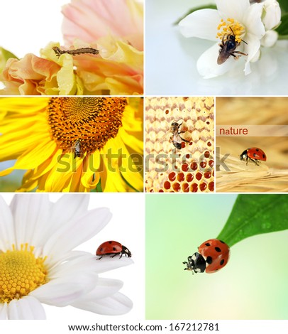 Collage of insects and flowers - stock photo